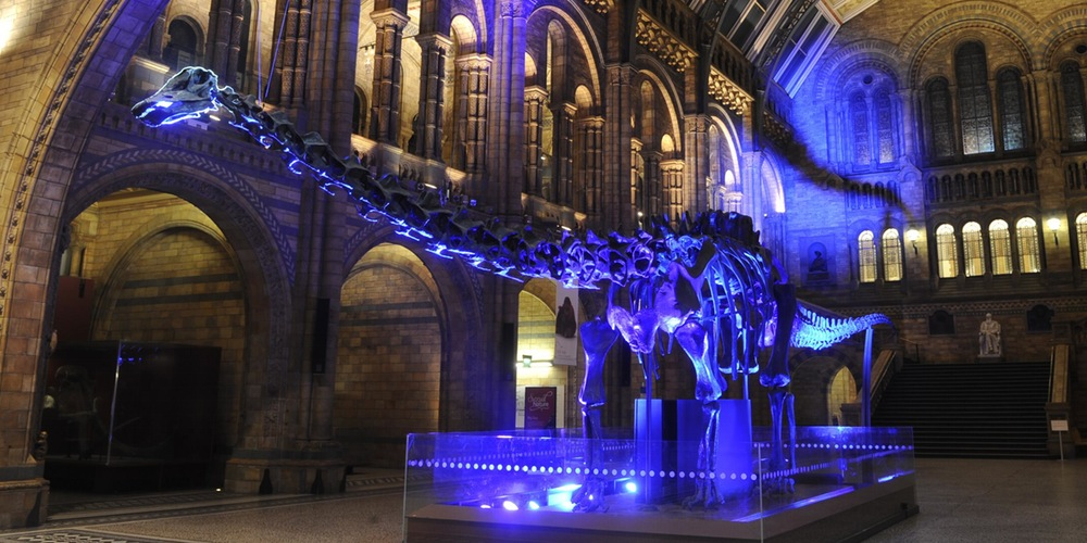 Jurrassic park at natural History Museum